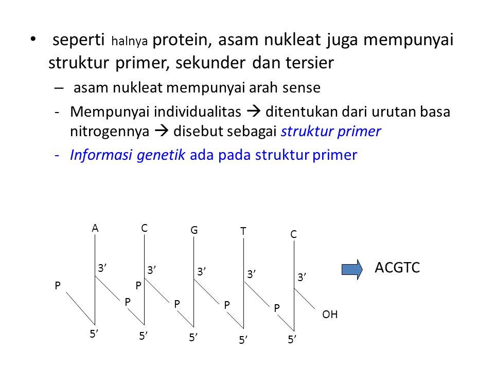 seperti halnya protein, asam nukleat juga mempunyai struktur primer, sekunder dan tersier – asam nukleat mempunyai arah sense -Mempunyai individualita