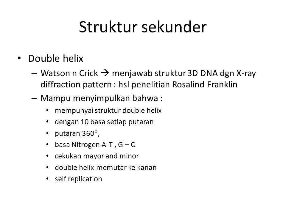 Struktur sekunder Double helix – Watson n Crick  menjawab struktur 3D DNA dgn X-ray diffraction pattern : hsl penelitian Rosalind Franklin – Mampu me