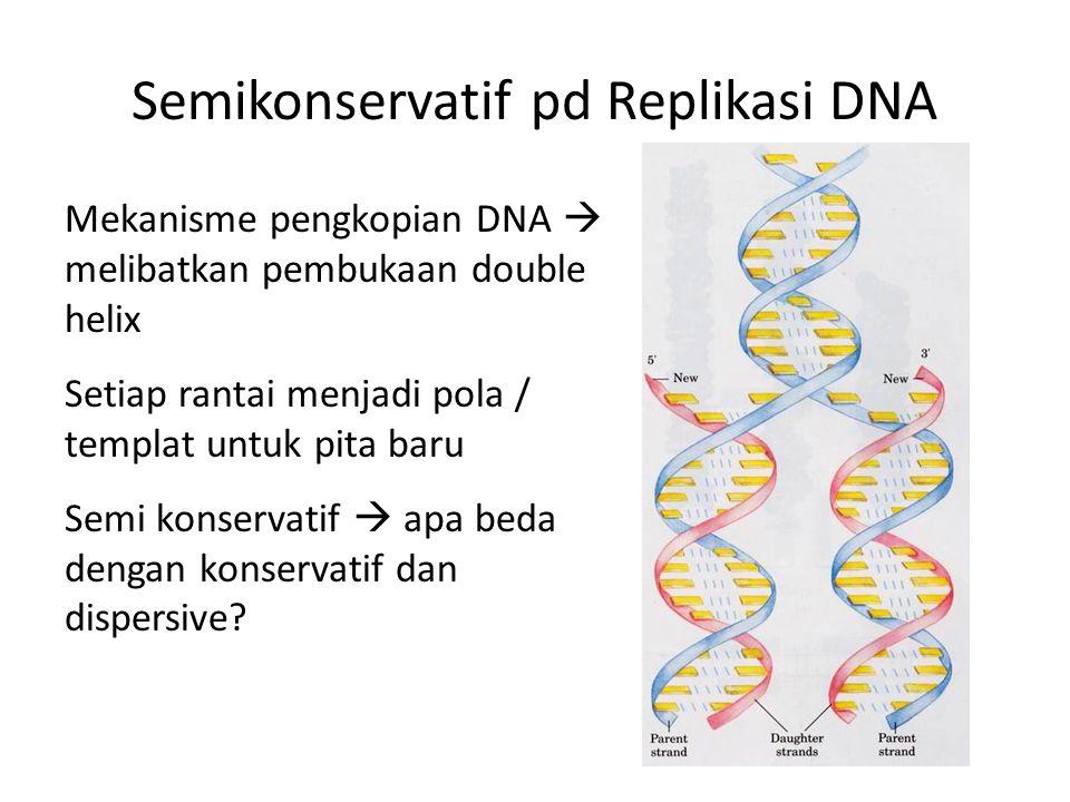 Semikonservatif pd Replikasi DNA Mekanisme pengkopian DNA  melibatkan pembukaan double helix Setiap rantai menjadi pola / templat untuk pita baru Sem
