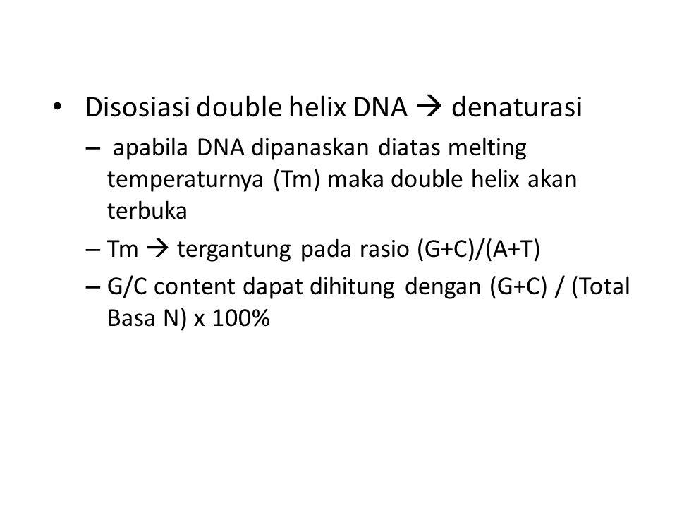 Disosiasi double helix DNA  denaturasi – apabila DNA dipanaskan diatas melting temperaturnya (Tm) maka double helix akan terbuka – Tm  tergantung pa