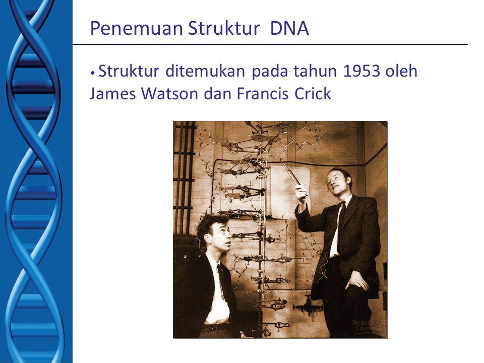 Struktur sekunder Double helix – Watson n Crick  menjawab struktur 3D DNA dgn X-ray diffraction pattern : hsl penelitian Rosalind Franklin – Mampu menyimpulkan bahwa : mempunyai struktur double helix dengan 10 basa setiap putaran putaran 360 , basa Nitrogen A-T, G – C cekukan mayor and minor double helix memutar ke kanan self replication