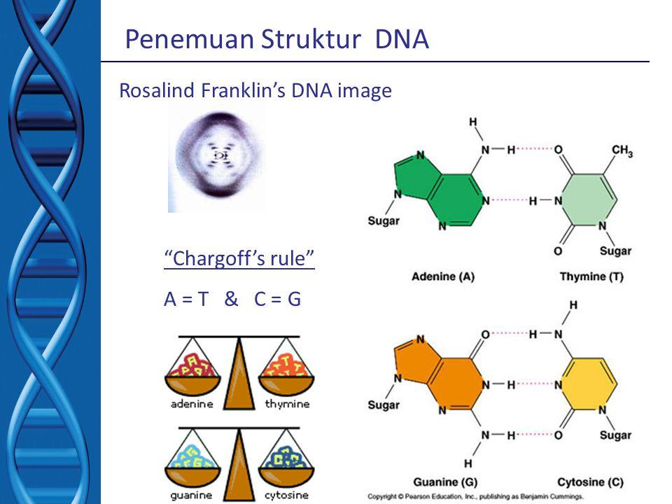 """Rosalind Franklin's DNA image """"Chargoff's rule"""" A = T & C = G Penemuan Struktur DNA"""