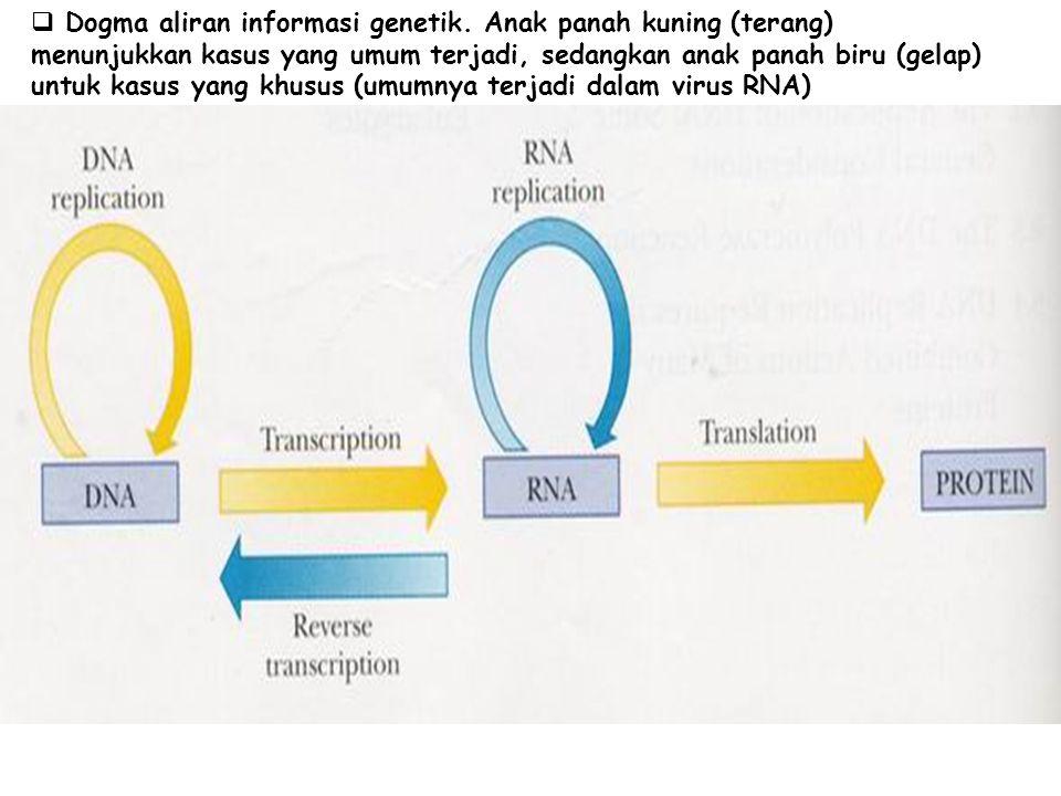  Dogma aliran informasi genetik. Anak panah kuning (terang) menunjukkan kasus yang umum terjadi, sedangkan anak panah biru (gelap) untuk kasus yang k