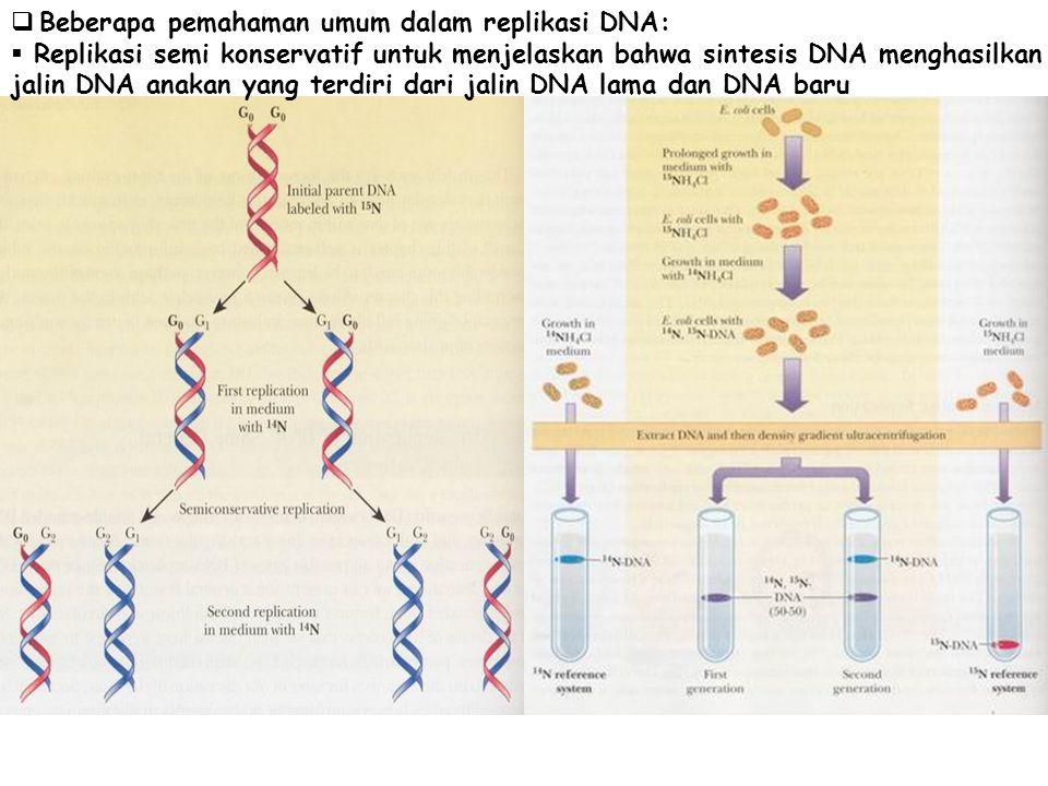  Beberapa pemahaman umum dalam replikasi DNA:  Replikasi semi konservatif untuk menjelaskan bahwa sintesis DNA menghasilkan jalin DNA anakan yang te