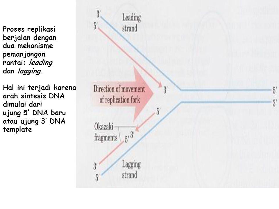 Proses replikasi berjalan dengan dua mekanisme pemanjangan rantai: leading dan lagging. Hal ini terjadi karena arah sintesis DNA dimulai dari ujung 5'