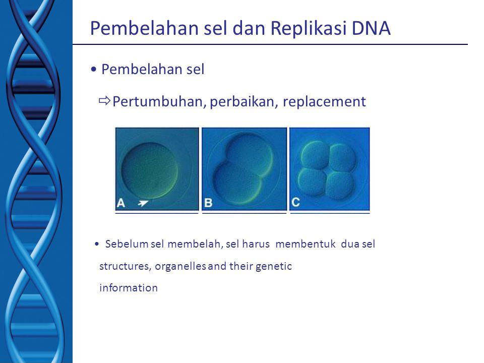 Pembelahan sel dan Replikasi DNA Pembelahan sel  Pertumbuhan, perbaikan, replacement Sebelum sel membelah, sel harus membentuk dua sel structures, or