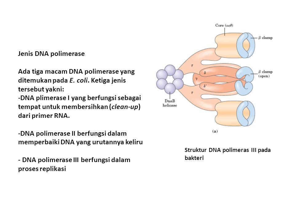 Jenis DNA polimerase Ada tiga macam DNA polimerase yang ditemukan pada E. coli. Ketiga jenis tersebut yakni: -DNA plimerase I yang berfungsi sebagai t
