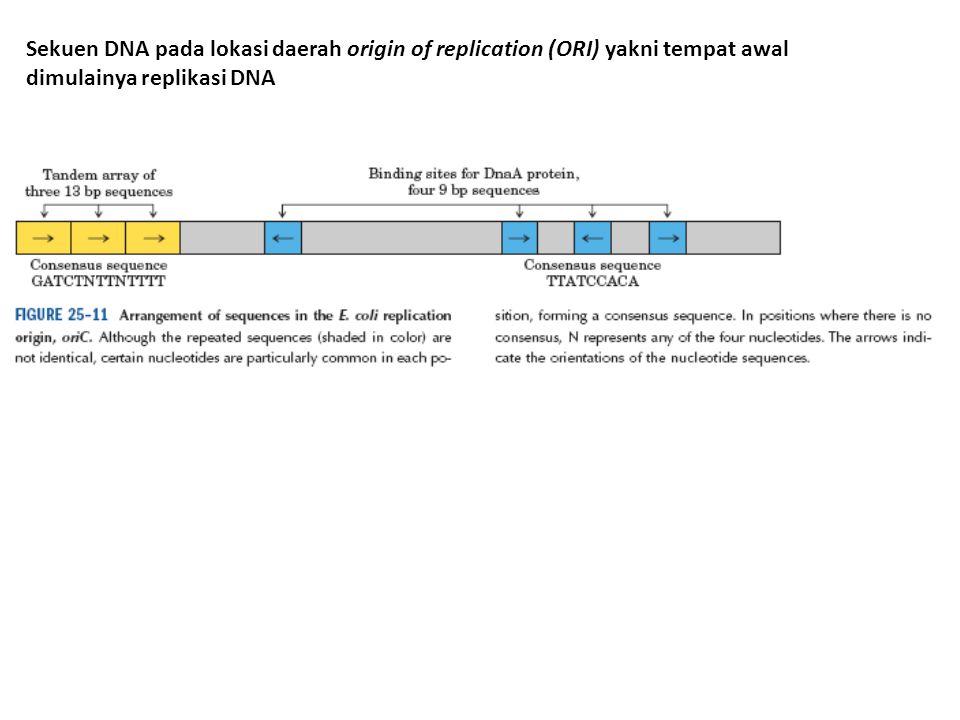 Sekuen DNA pada lokasi daerah origin of replication (ORI) yakni tempat awal dimulainya replikasi DNA