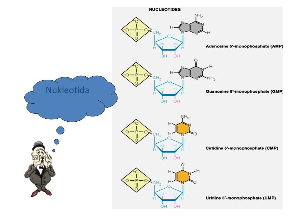 Didalam sel  dalam jalin ganda (double helix) Dimana gugus fosfat berada di luar dan basa nitrogennya di dalam Jalin ganda yg terbentuk bersifat anti parallel  ?