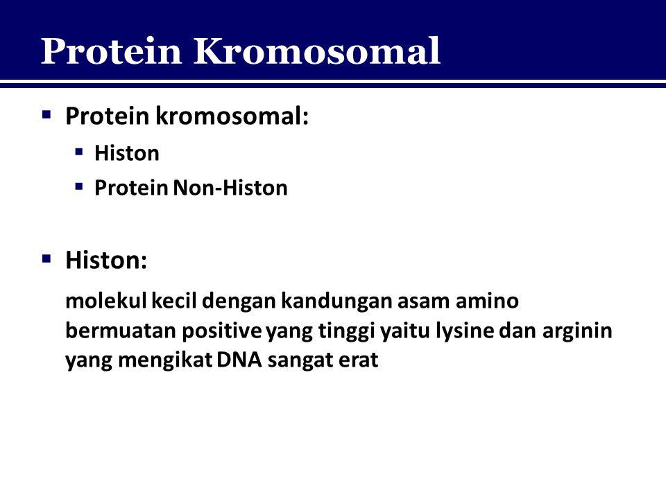 Protein Kromosomal  Protein kromosomal:  Histon  Protein Non-Histon  Histon: molekul kecil dengan kandungan asam amino bermuatan positive yang tin