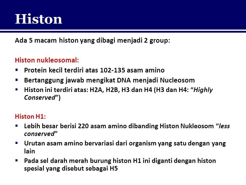 Histon Ada 5 macam histon yang dibagi menjadi 2 group: Histon nukleosomal:  Protein kecil terdiri atas 102-135 asam amino  Bertanggung jawab mengika