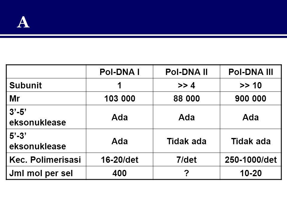Pol-DNA IPol-DNA IIPol-DNA III Subunit1>> 4>> 10 Mr103 00088 000900 000 3'-5' eksonuklease Ada 5'-3' eksonuklease AdaTidak ada Kec. Polimerisasi16-20/