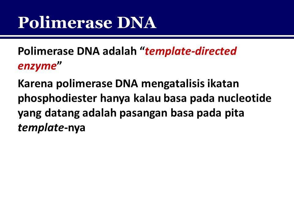 "Polimerase DNA Polimerase DNA adalah ""template-directed enzyme"" Karena polimerase DNA mengatalisis ikatan phosphodiester hanya kalau basa pada nucleot"