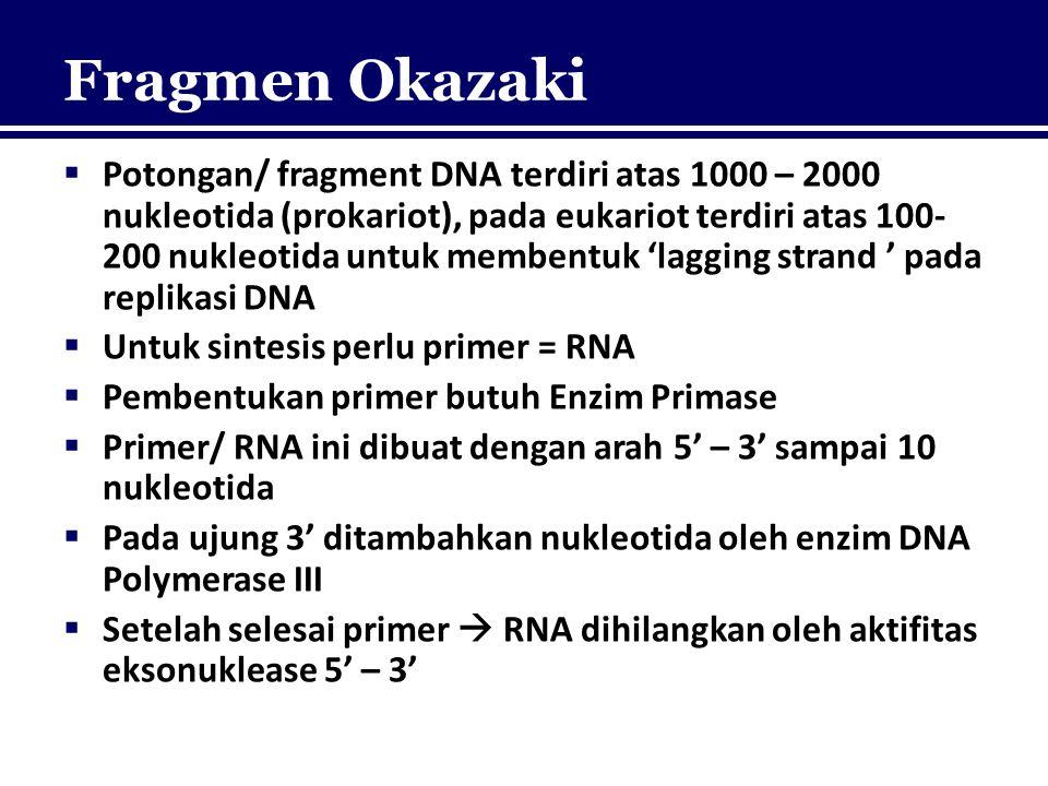 Fragmen Okazaki  Potongan/ fragment DNA terdiri atas 1000 – 2000 nukleotida (prokariot), pada eukariot terdiri atas 100- 200 nukleotida untuk membent