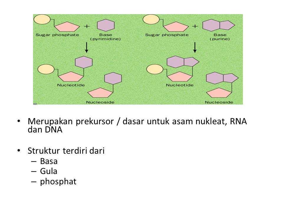 Merupakan prekursor / dasar untuk asam nukleat, RNA dan DNA Struktur terdiri dari – Basa – Gula – phosphat