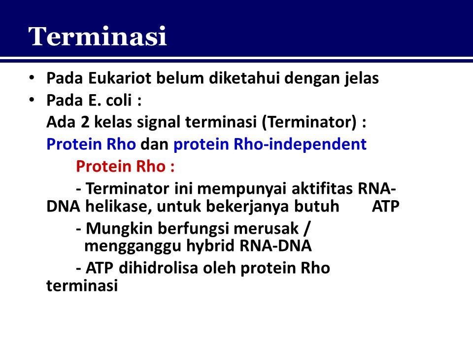 Terminasi Pada Eukariot belum diketahui dengan jelas Pada E. coli : Ada 2 kelas signal terminasi (Terminator) : Protein Rho dan protein Rho-independen