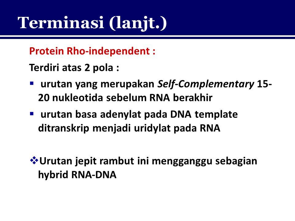Terminasi (lanjt.) Protein Rho-independent : Terdiri atas 2 pola :  urutan yang merupakan Self-Complementary 15- 20 nukleotida sebelum RNA berakhir 