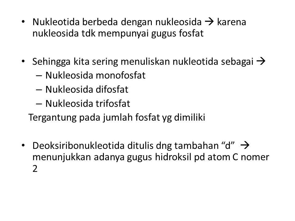 Nukleotida berbeda dengan nukleosida  karena nukleosida tdk mempunyai gugus fosfat Sehingga kita sering menuliskan nukleotida sebagai  – Nukleosida