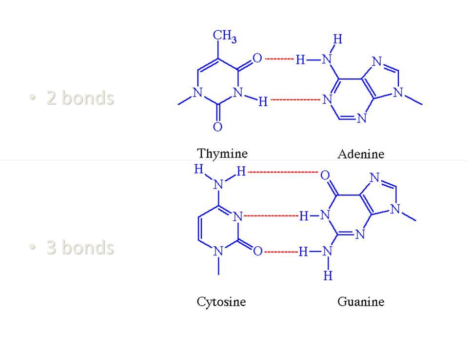 2 bonds 2 bonds 3 bonds 3 bonds