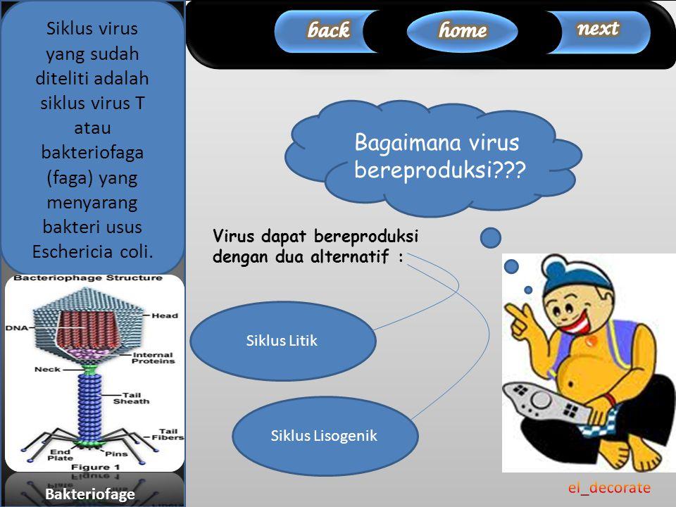 Siklus Litik Bagaimana virus bereproduksi??? Siklus Lisogenik Virus dapat bereproduksi dengan dua alternatif : Siklus virus yang sudah diteliti adalah