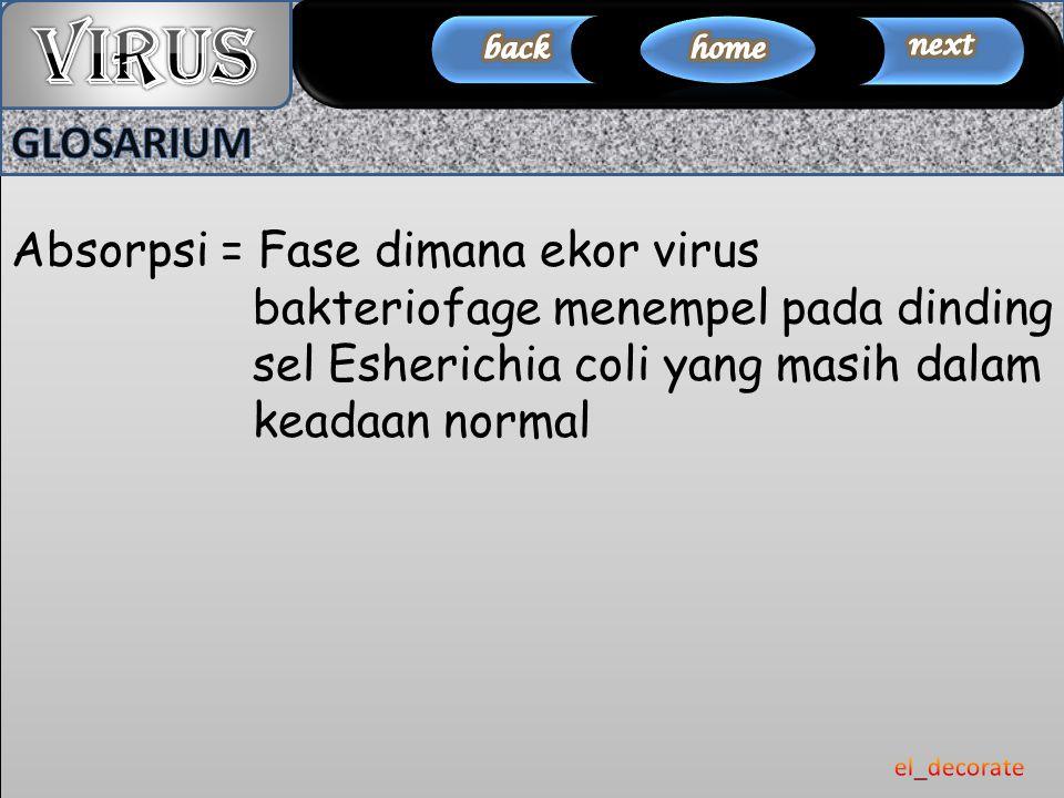 Absorpsi = Fase dimana ekor virus bakteriofage menempel pada dinding sel Esherichia coli yang masih dalam keadaan normal