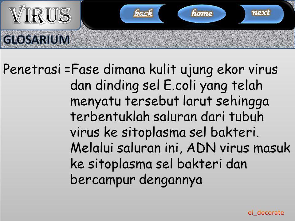 Penetrasi =Fase dimana kulit ujung ekor virus dan dinding sel E.coli yang telah menyatu tersebut larut sehingga terbentuklah saluran dari tubuh virus