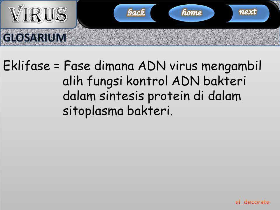 Eklifase = Fase dimana ADN virus mengambil alih fungsi kontrol ADN bakteri dalam sintesis protein di dalam sitoplasma bakteri.