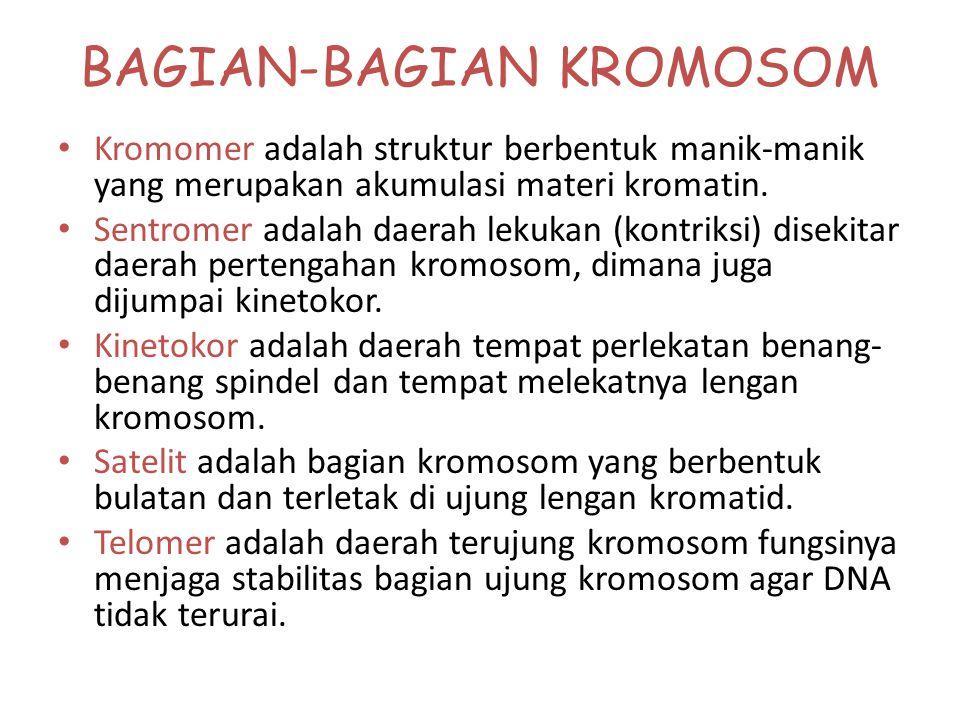 KROMOSOM Pengemasan DNA dalam kromosom. DNA heliks ganda Kromosom pada tahap metafase Struktur padat yang terdiri dari protein dan DNA. Nukleosom memb
