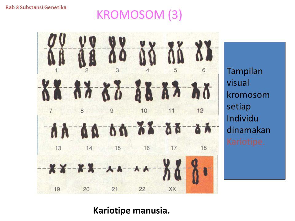 KROMOMER DAN KROMONEMA SUATU KROMOSOM. Kromomer. Kromonema. kromomer Sentromer. kromonema