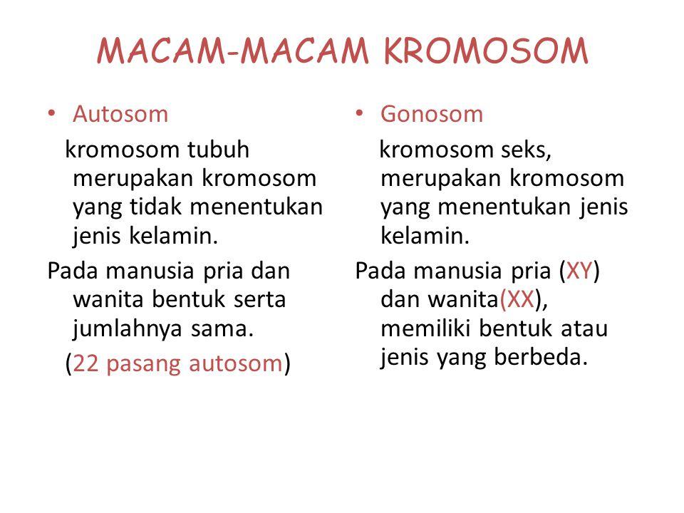 MACAM-MACAM BENTUK KROMOSOM A. metasentrik. B. submetasentrik. C. akrosentrik. D. telosentrik. A D B C