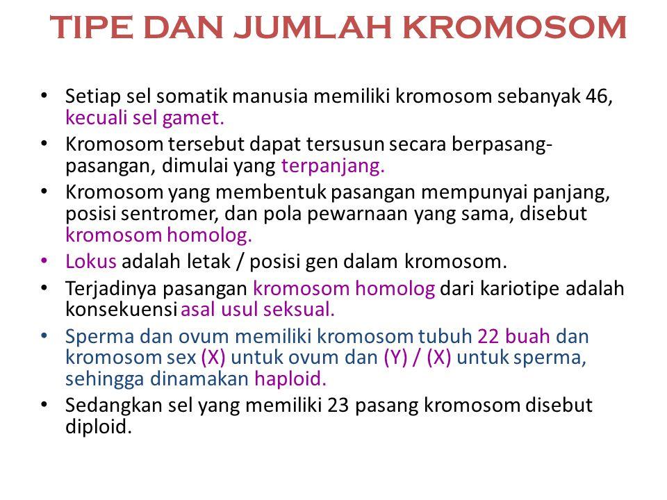 MACAM-MACAM KROMOSOM Autosom kromosom tubuh merupakan kromosom yang tidak menentukan jenis kelamin. Pada manusia pria dan wanita bentuk serta jumlahny