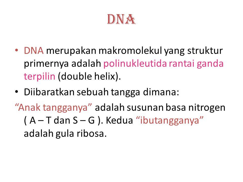 "Susunan basa nitrogen pada DNA. Bab 3 Substansi Genetika Setiap gugus phospat menghubungkan Ujung 3"" karbon pada gula ke 5"" karbon Pada gula berikutny"