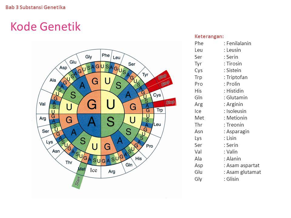 Perbedaan DNA dan RNA Bab 3 Substansi Genetika