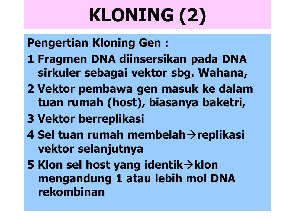 KL0NING (1) Latar Belakang Pentingnya Kloning (DNA Rekombinan): -Belum jelasnya transkripsi dan translasi, dan kode genetik pada gen-gen -Tuntutan: Si