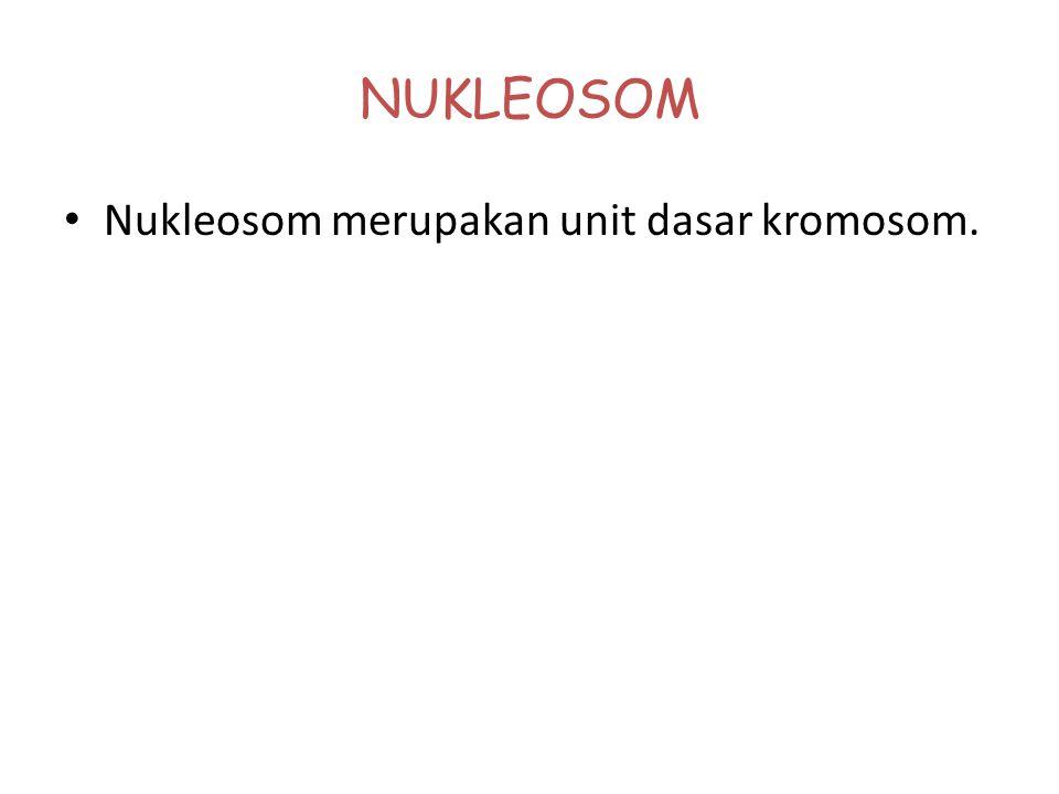 KROMOSOM Kromosom adalah suatu struktur padat yang terdiri dari 2 komponen molekul, yaitu: Protein. DNA. Struktur padat kromosom hanya dapat dilihat j