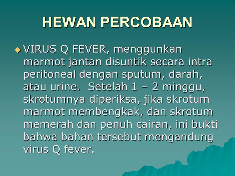  VIRUS Q FEVER, menggunkan marmot jantan disuntik secara intra peritoneal dengan sputum, darah, atau urine.