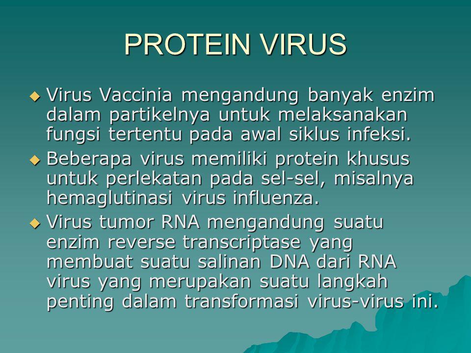  Virus Vaccinia mengandung banyak enzim dalam partikelnya untuk melaksanakan fungsi tertentu pada awal siklus infeksi.