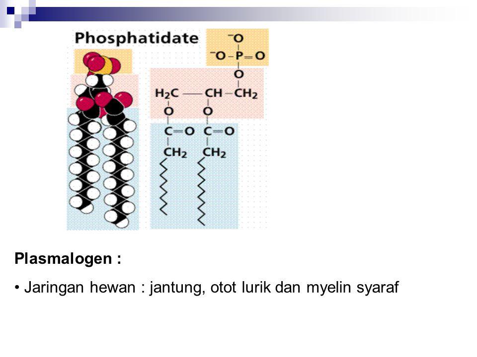Plasmalogen : Jaringan hewan : jantung, otot lurik dan myelin syaraf