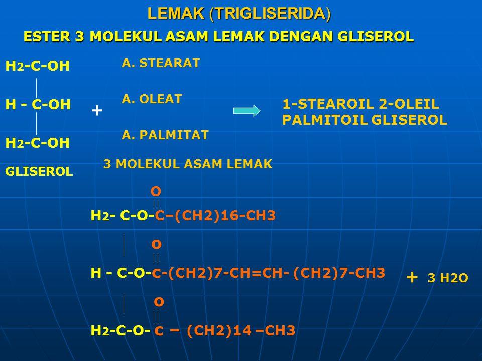 LEMAK (TRIGLISERIDA) ESTER 3 MOLEKUL ASAM LEMAK DENGAN GLISEROL H 2 -C-OH H - C-OH H 2 -C-OH + A. STEARAT A. OLEAT A. PALMITAT O H 2 - C-O-C–(CH2)16-C
