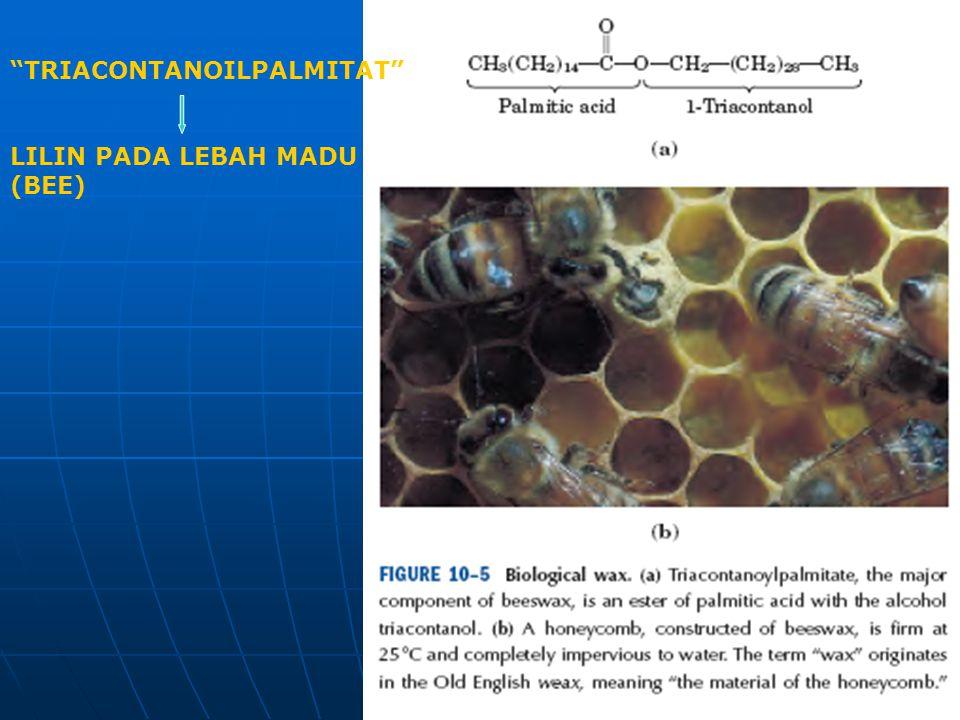 """""""TRIACONTANOILPALMITAT"""" LILIN PADA LEBAH MADU (BEE)"""