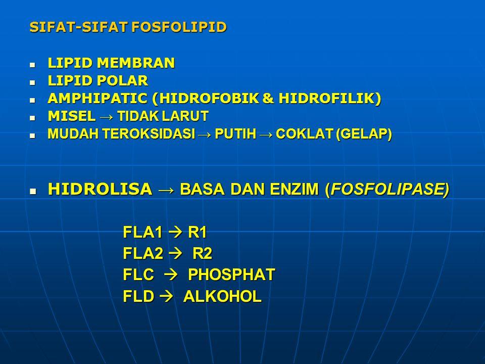 SIFAT-SIFAT FOSFOLIPID LIPID MEMBRAN LIPID MEMBRAN LIPID POLAR LIPID POLAR AMPHIPATIC (HIDROFOBIK & HIDROFILIK) AMPHIPATIC (HIDROFOBIK & HIDROFILIK) M