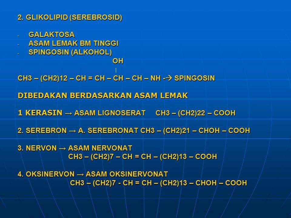 2. GLIKOLIPID (SEREBROSID) - GALAKTOSA - ASAM LEMAK BM TINGGI - SPINGOSIN (ALKOHOL) OH OH CH3 – (CH2)12 – CH = CH – CH – CH – NH -  SPINGOSIN DIBEDAK