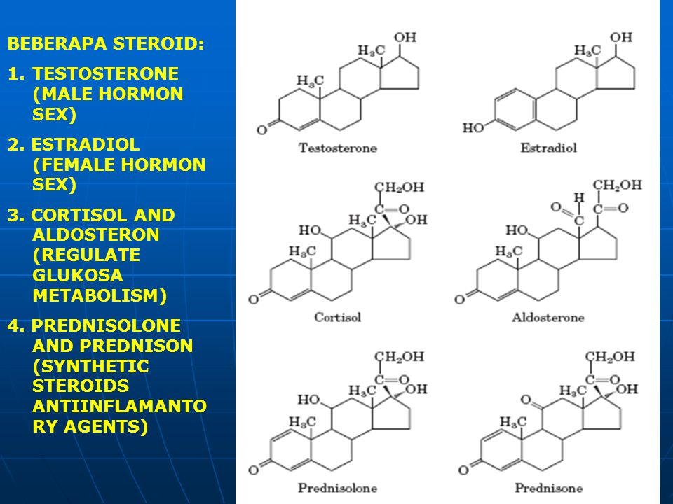 BEBERAPA STEROID: 1.TESTOSTERONE (MALE HORMON SEX) 2. ESTRADIOL (FEMALE HORMON SEX) 3. CORTISOL AND ALDOSTERON (REGULATE GLUKOSA METABOLISM) 4. PREDNI