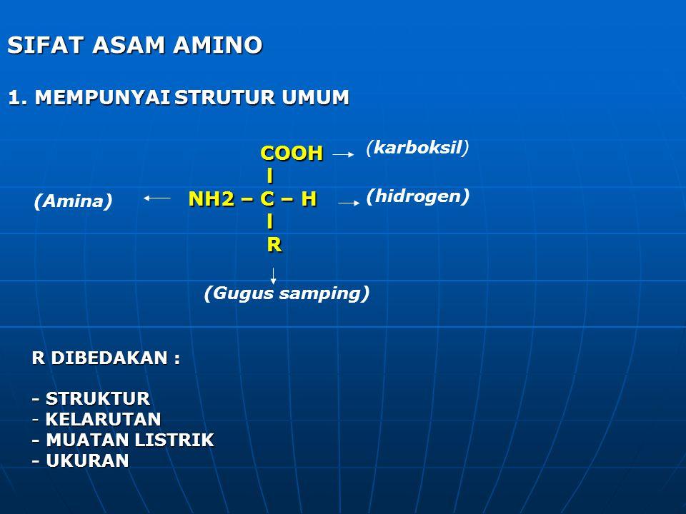 SIFAT ASAM AMINO 1. MEMPUNYAI STRUTUR UMUM COOH COOH l NH2 – C – H NH2 – C – H l R R DIBEDAKAN : - STRUKTUR - KELARUTAN - MUATAN LISTRIK - UKURAN (kar