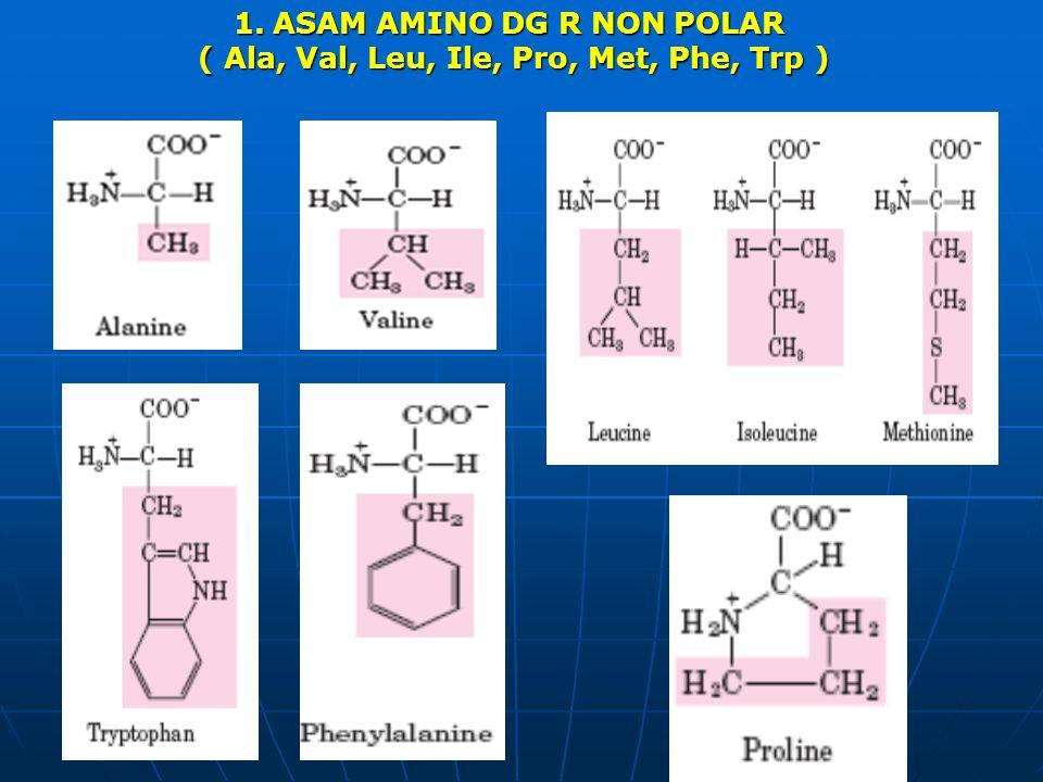 1.ASAM AMINO DG R NON POLAR ( Ala, Val, Leu, Ile, Pro, Met, Phe, Trp ) ( Ala, Val, Leu, Ile, Pro, Met, Phe, Trp )