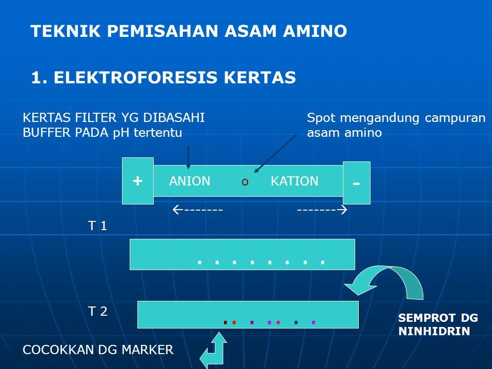 ANION o KATION + -............... T 1 T 2 SEMPROT DG NINHIDRIN KERTAS FILTER YG DIBASAHI BUFFER PADA pH tertentu Spot mengandung campuran asam amino 