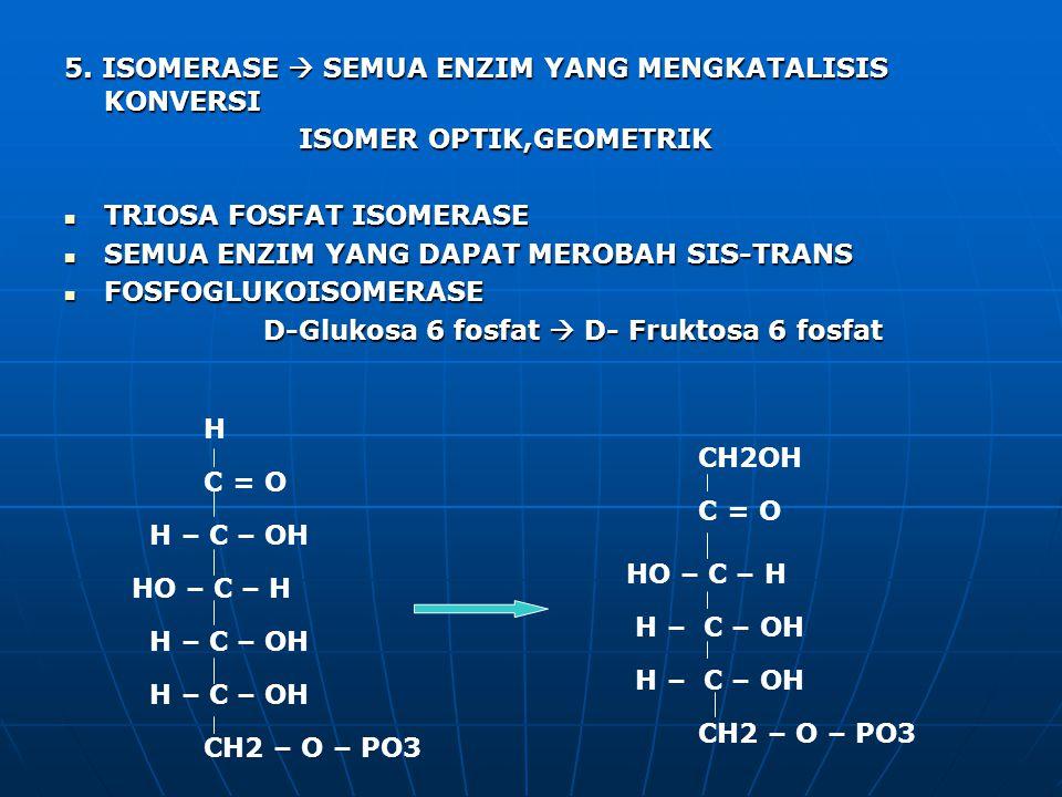 5. ISOMERASE  SEMUA ENZIM YANG MENGKATALISIS KONVERSI ISOMER OPTIK,GEOMETRIK ISOMER OPTIK,GEOMETRIK TRIOSA FOSFAT ISOMERASE TRIOSA FOSFAT ISOMERASE S