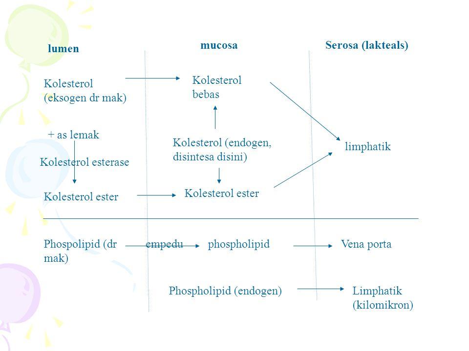lumen mucosaSerosa (lakteals) Kolesterol (eksogen dr mak) Kolesterol bebas + as lemak Kolesterol esterase Kolesterol ester Kolesterol (endogen, disintesa disini) Kolesterol ester limphatik Phospolipid (dr mak) empeduphospholipidVena porta Phospholipid (endogen)Limphatik (kilomikron)