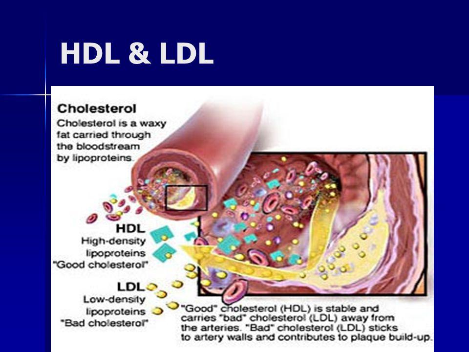 Lipoprotein 5