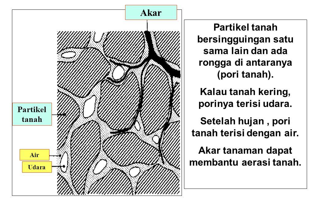 Partikel tanah bersingguingan satu sama lain dan ada rongga di antaranya (pori tanah).